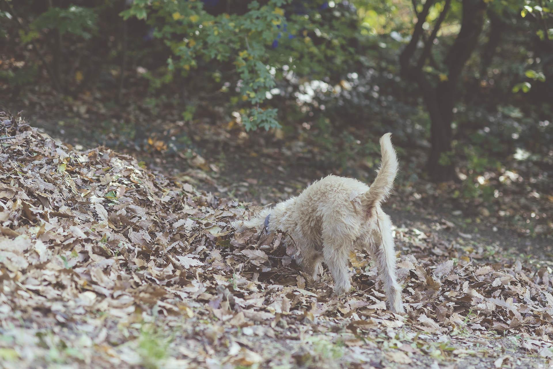 lbmediart őszi kalandok Benővel